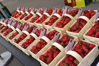 bio Erdbeeren Thomas Bogner